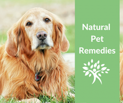 natural dog vomiting and diarrhea remedies